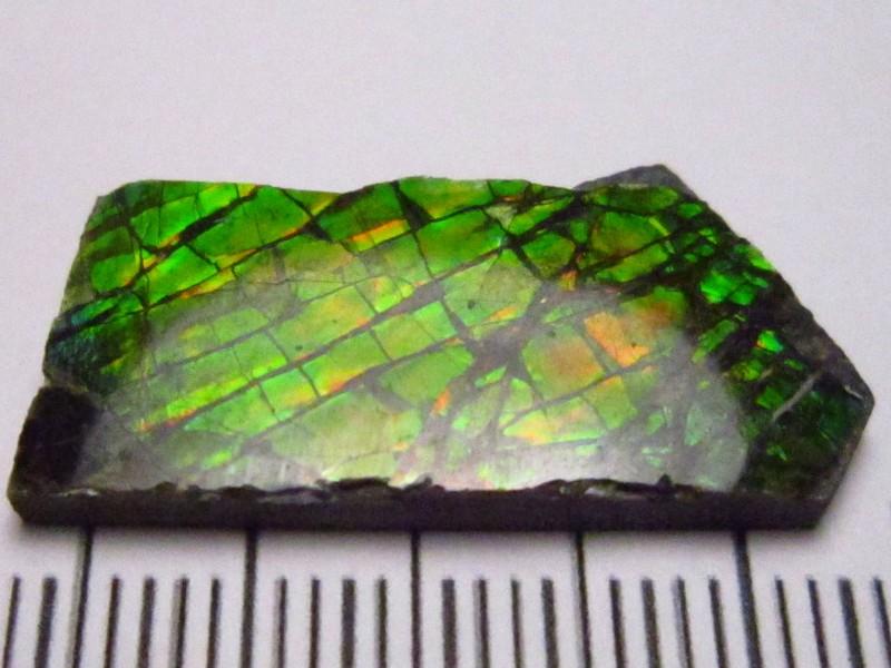 Ammolite 11.08cts
